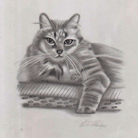 Tabby Cat Portrait Pencil Drawing